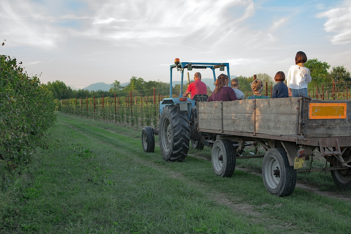 eventi enogastronomici presso Agriturismo da Zeffi a Treviso